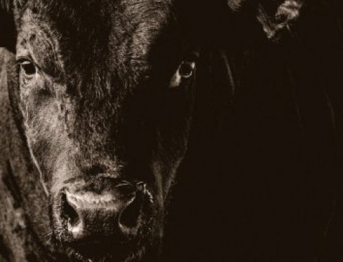 Bull One